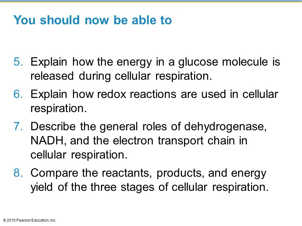 You should now be able to 5.Explain how the energy in a glucose molecule is released during cellular respiration. 6.Explain how redox reactions are us