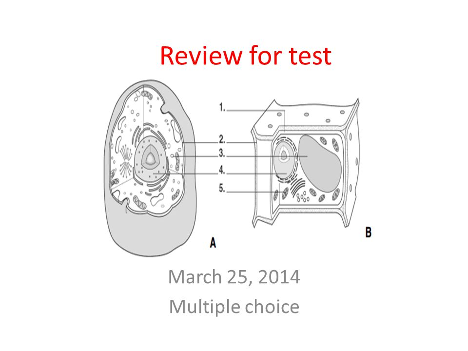 March 25, 2014 Multiple choice Review for test