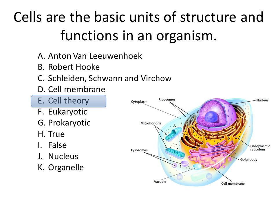 Cells are the basic units of structure and functions in an organism. A.Anton Van Leeuwenhoek B.Robert Hooke C.Schleiden, Schwann and Virchow D.Cell me