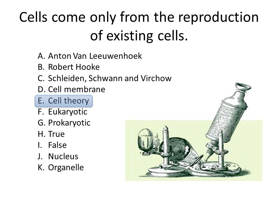 Cells come only from the reproduction of existing cells. A.Anton Van Leeuwenhoek B.Robert Hooke C.Schleiden, Schwann and Virchow D.Cell membrane E.Cel
