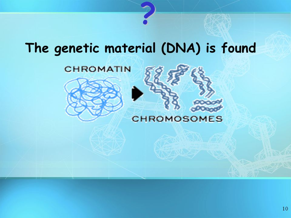 10 The genetic material (DNA) is found?