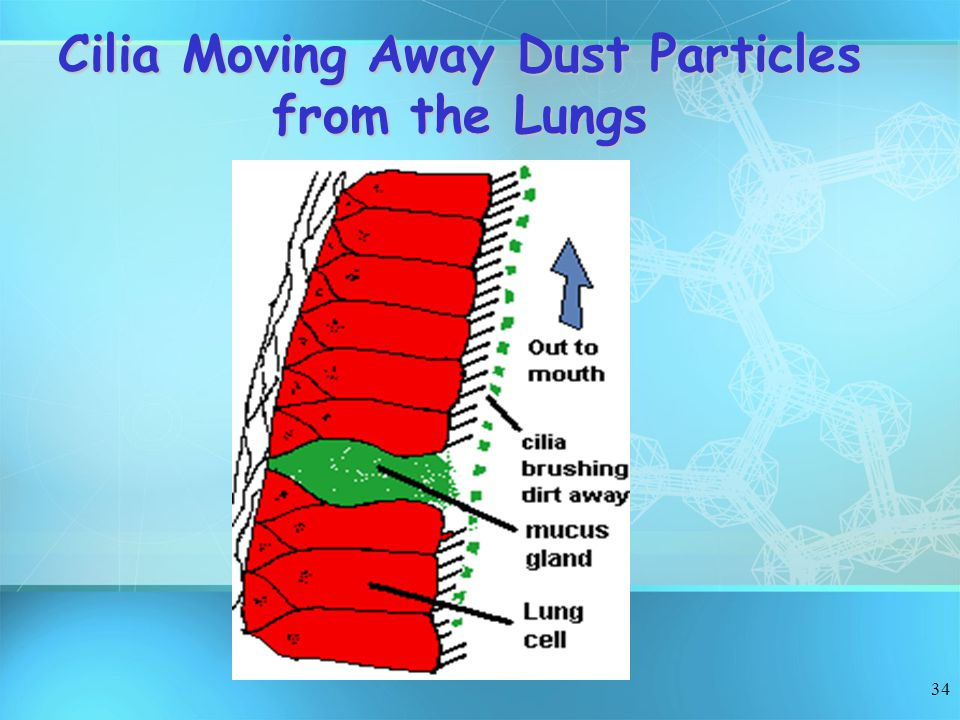 34 Cilia Moving Away Dust Particles from the Lungs