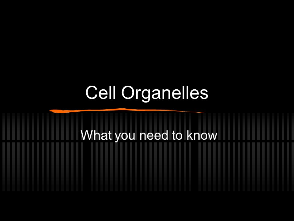 Cell Organelles What you need to know
