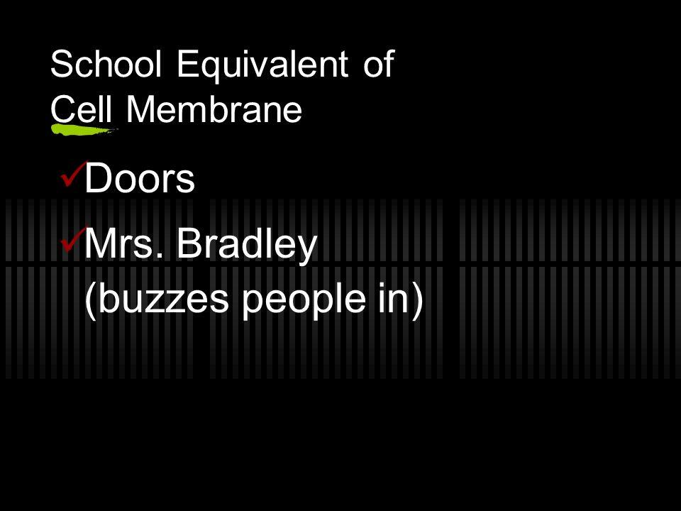 School Equivalent of Cell Membrane Doors Mrs. Bradley (buzzes people in)