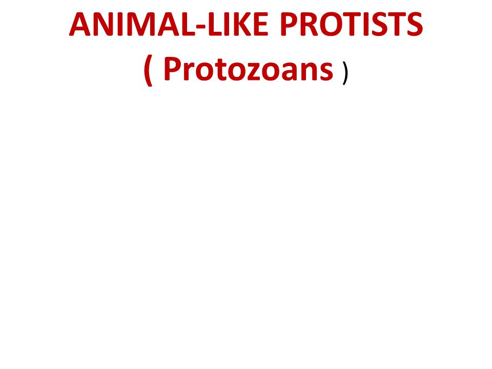 ANIMAL-LIKE PROTISTS ( Protozoans )