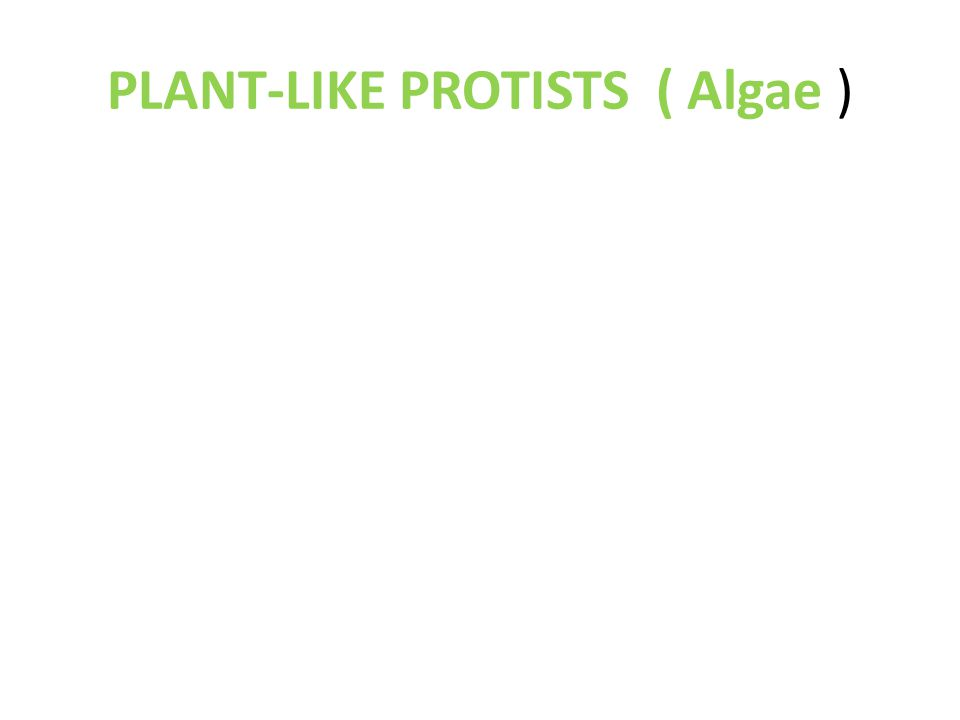 PLANT-LIKE PROTISTS ( Algae )