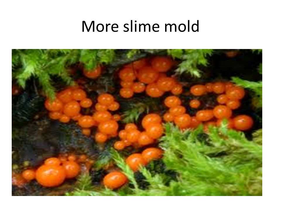 More slime mold