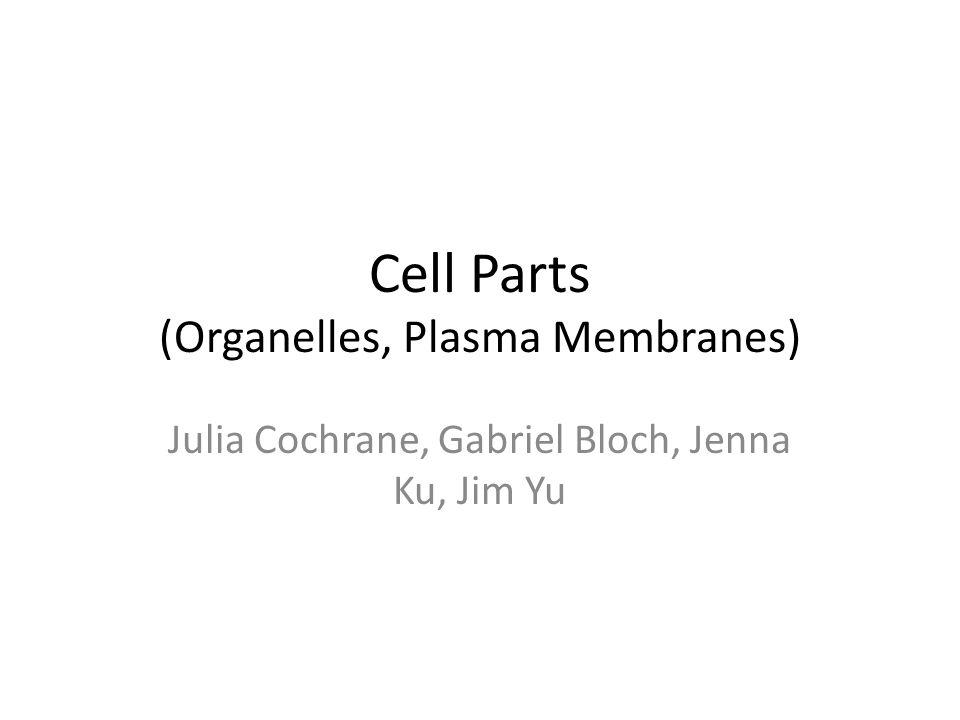 Cell Parts (Organelles, Plasma Membranes) Julia Cochrane, Gabriel Bloch, Jenna Ku, Jim Yu