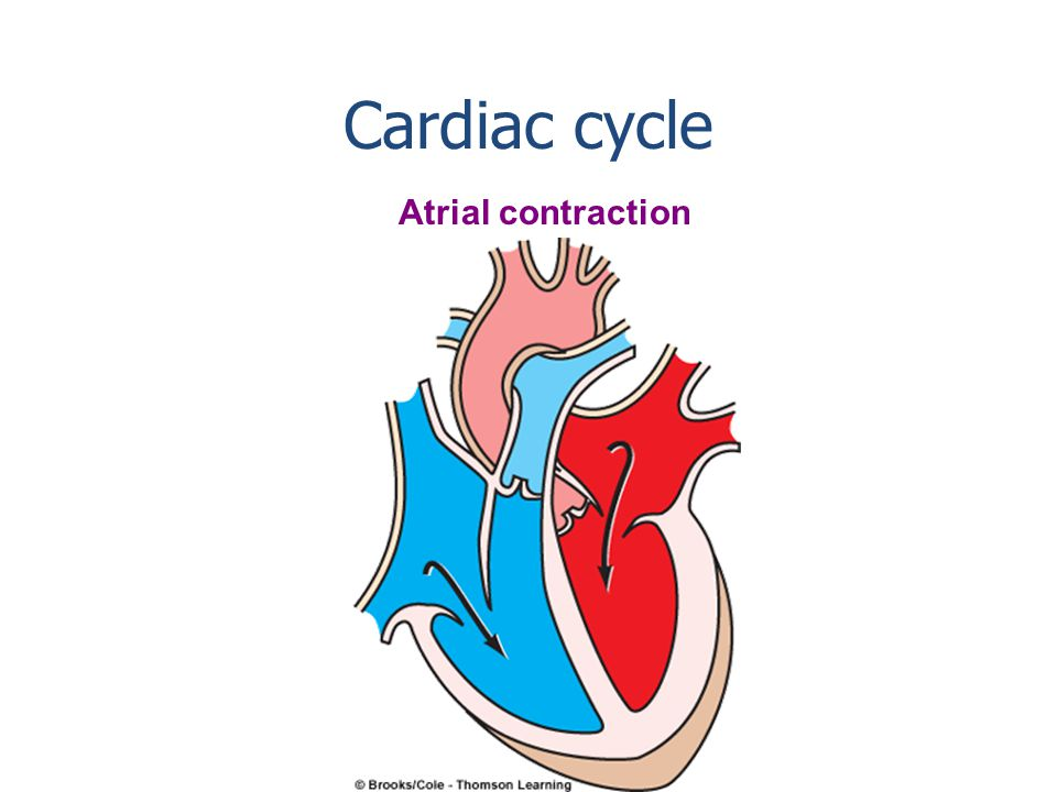 Ventricular and atrial diastole Cardiac cycle