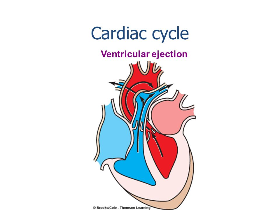 Isovolumetric ventricular contraction Cardiac cycle Lub End diastolic volume is in the ventricles