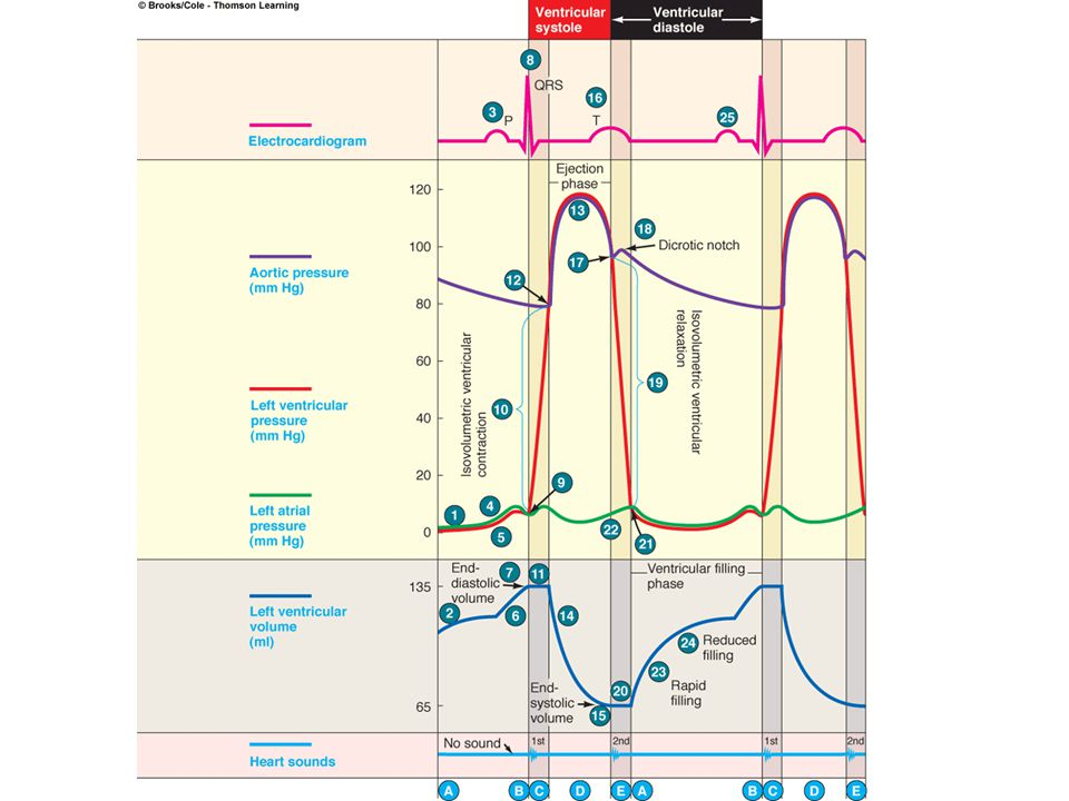 Isovolumetric ventricular relaxation Cardiac cycle Dub End systolic volume is in ventricles
