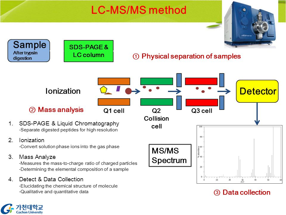 LC-MS/MS method SDS-PAGE & LC column Sample After trypsin digestion Ionization Q1 cell Q3 cellQ2 Collision cell Detector MS/MS Spectrum ① Physical separation of samples ② Mass analysis 1.SDS-PAGE & Liquid Chromatography -Separate digested peptides for high resolution 2.Ionization -Convert solution phase ions into the gas phase 3.Mass Analyze -Measures the mass-to-charge ratio of charged particles -Determining the elemental composition of a sample 4.Detect & Data Collection -Elucidating the chemical structure of molecule -Qualitative and quantitative data ③ Data collection
