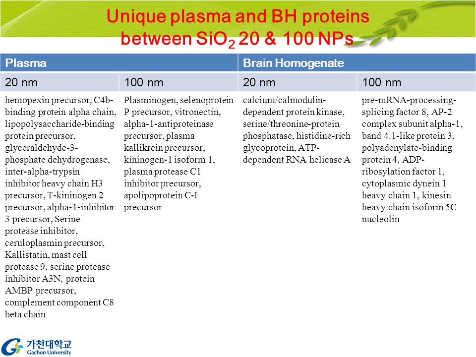 Unique plasma and BH proteins between SiO 2 20 & 100 NPs PlasmaBrain Homogenate 20 nm100 nm20 nm100 nm hemopexin precursor, C4b- binding protein alpha chain, lipopolysaccharide-binding protein precursor, glyceraldehyde-3- phosphate dehydrogenase, inter-alpha-trypsin inhibitor heavy chain H3 precursor, T-kininogen 2 precursor, alpha-1-inhibitor 3 precursor, Serine protease inhibitor, ceruloplasmin precursor, Kallistatin, mast cell protease 9, serine protease inhibitor A3N, protein AMBP precursor, complement component C8 beta chain Plasminogen, selenoprotein P precursor, vitronectin, alpha-1-antiproteinase precursor, plasma kallikrein precursor, kininogen-1 isoform 1, plasma protease C1 inhibitor precursor, apolipoprotein C-I precursor calcium/calmodulin- dependent protein kinase, serine/threonine-protein phosphatase, histidine-rich glycoprotein, ATP- dependent RNA helicase A pre-mRNA-processing- splicing factor 8, AP-2 complex subunit alpha-1, band 4.1-like protein 3, polyadenylate-binding protein 4, ADP- ribosylation factor 1, cytoplasmic dynein 1 heavy chain 1, kinesin heavy chain isoform 5C nucleolin