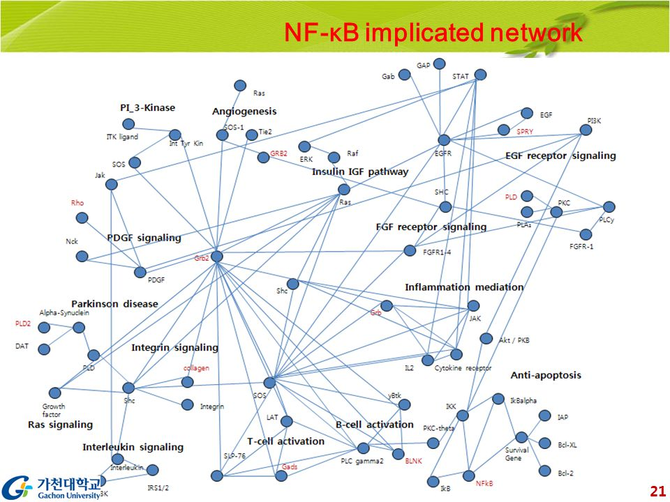 NF-κB implicated network 21