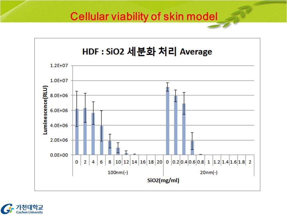Cellular viability of skin model
