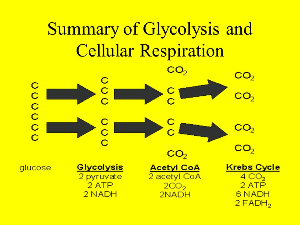 Summary of Glycolysis and Cellular Respiration Glycolysis