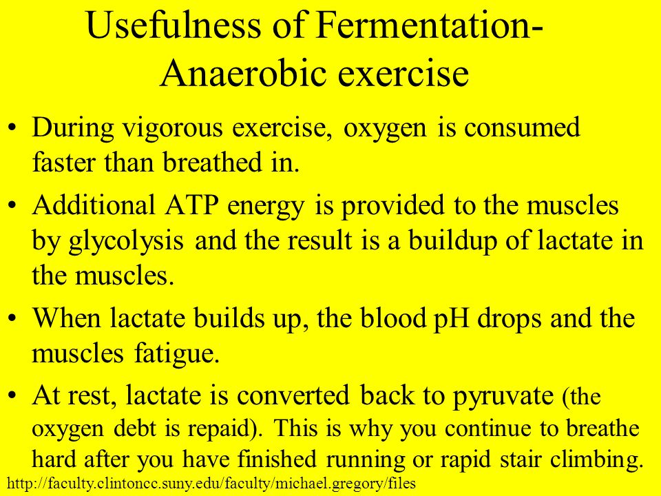 Usefulness of Fermentation- Anaerobic exercise During vigorous exercise, oxygen is consumed faster than breathed in. Additional ATP energy is provided