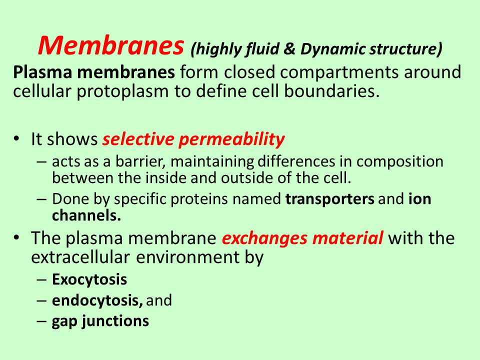 Membranes (highly fluid & Dynamic structure) Plasma membranes form closed compartments around cellular protoplasm to define cell boundaries.