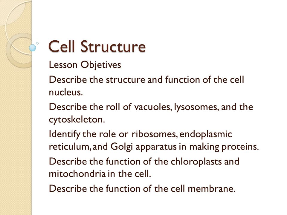 Cell Structure Lesson Objetives Describe the structure and function of the cell nucleus.
