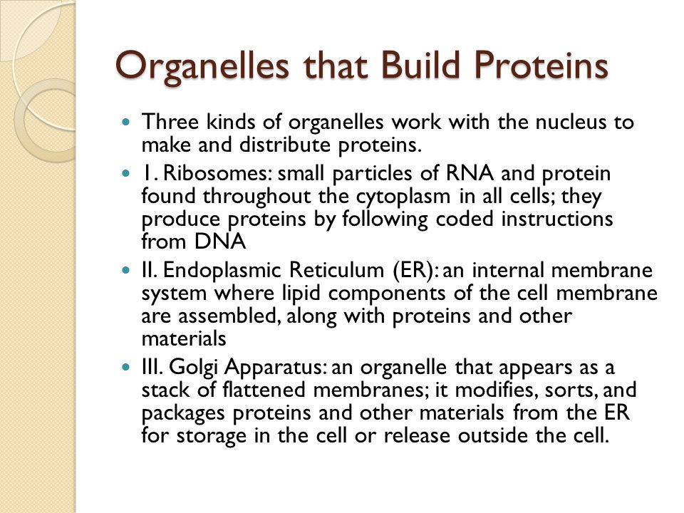 Organelles that Build Proteins Three kinds of organelles work with the nucleus to make and distribute proteins.