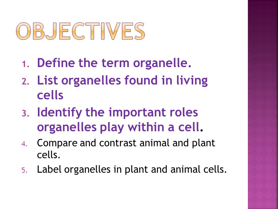 1. Define the term organelle. 2. List organelles found in living cells 3. Identify the important roles organelles play within a cell. 4. Compare and c