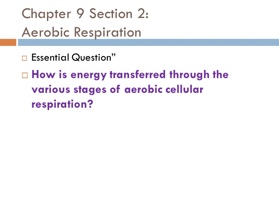 "Chapter 9 Section 2: Aerobic Respiration  Essential Question""  How is energy transferred through the various stages of aerobic cellular respiration?"
