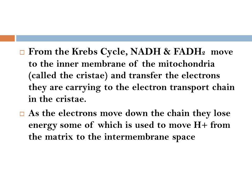  From the Krebs Cycle, NADH & FADH 2 move to the inner membrane of the mitochondria (called the cristae) and transfer the electrons they are carrying
