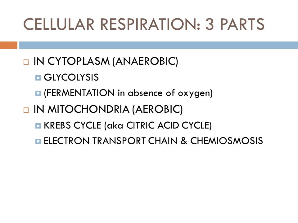 CELLULAR RESPIRATION: 3 PARTS  IN CYTOPLASM (ANAEROBIC)  GLYCOLYSIS  (FERMENTATION in absence of oxygen)  IN MITOCHONDRIA (AEROBIC)  KREBS CYCLE