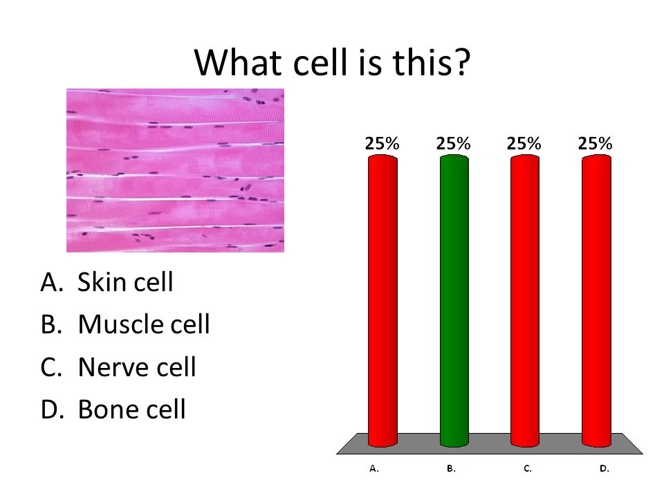 What cell is this? A.Skin cell B.Muscle cell C.Nerve cell D.Bone cell