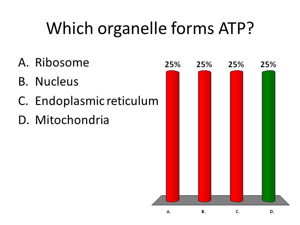 Which organelle forms ATP A.Ribosome B.Nucleus C.Endoplasmic reticulum D.Mitochondria