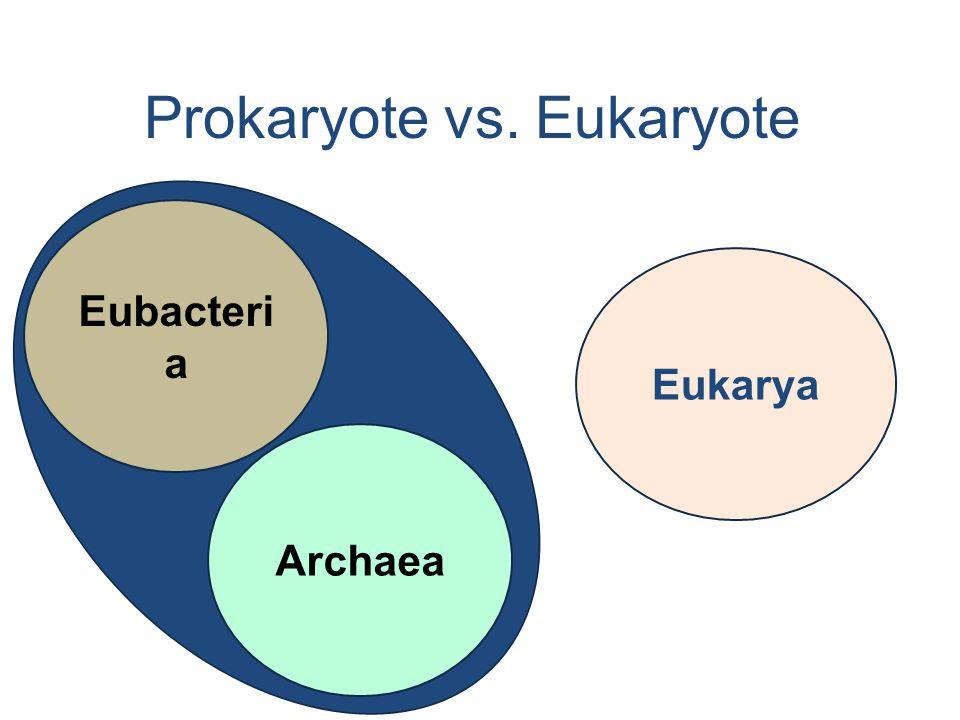 Prokaryote vs. Eukaryote Eubacteri a Archaea Eukarya