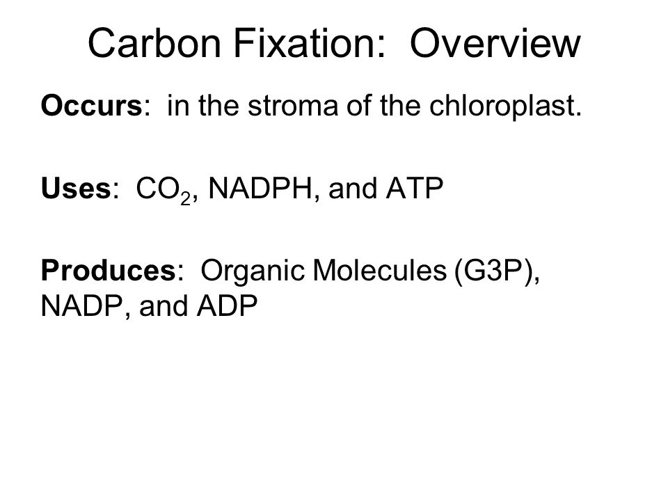 Carbon Fixation: Overview Occurs: in the stroma of the chloroplast.