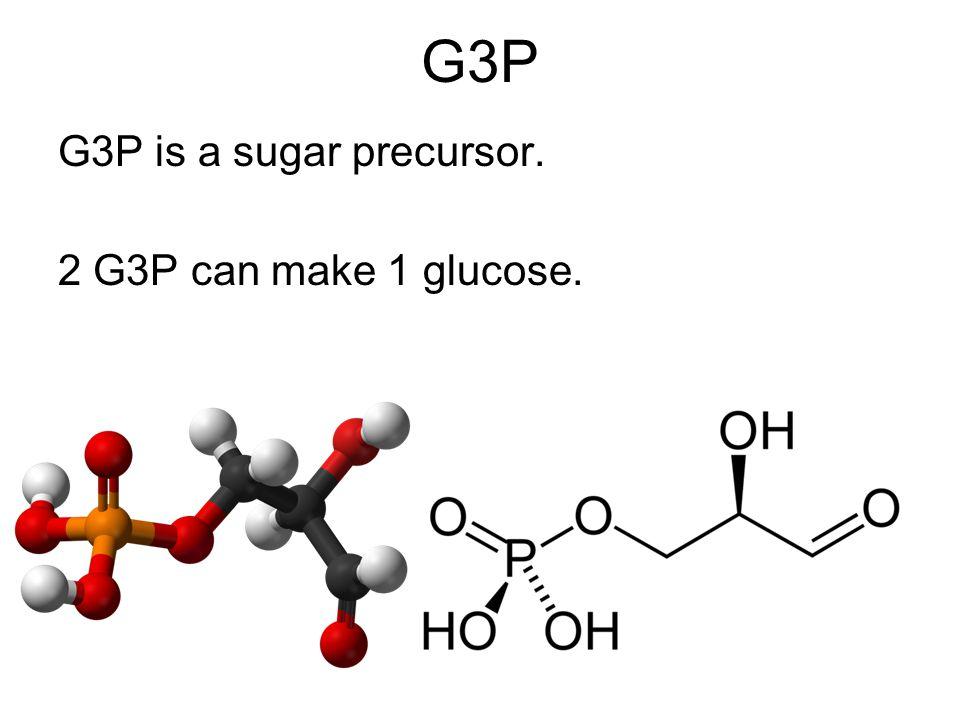 G3P G3P is a sugar precursor. 2 G3P can make 1 glucose.