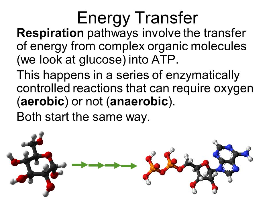Energy Transfer Respiration pathways involve the transfer of energy from complex organic molecules (we look at glucose) into ATP.
