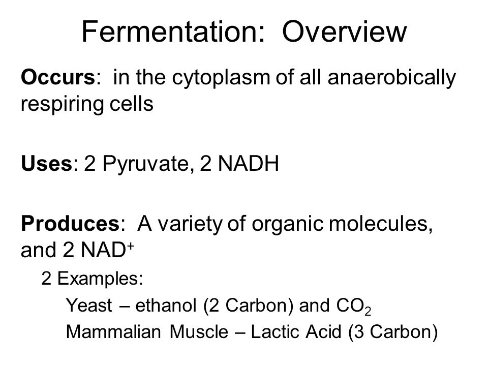 Fermentation: Overview Occurs: in the cytoplasm of all anaerobically respiring cells Uses: 2 Pyruvate, 2 NADH Produces: A variety of organic molecules, and 2 NAD + 2 Examples: Yeast – ethanol (2 Carbon) and CO 2 Mammalian Muscle – Lactic Acid (3 Carbon)