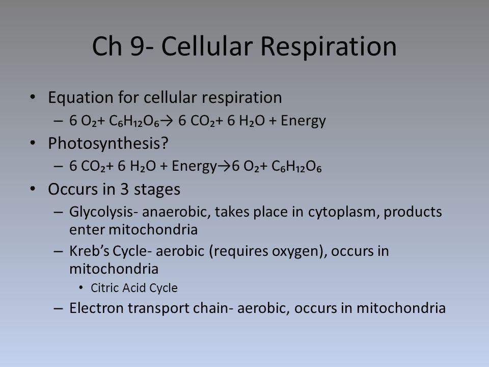 Ch 9- Cellular Respiration Equation for cellular respiration – 6 O₂+ C₆H₁₂O₆→ 6 CO₂+ 6 H₂O + Energy Photosynthesis? – 6 CO₂+ 6 H₂O + Energy→6 O₂+ C₆H₁