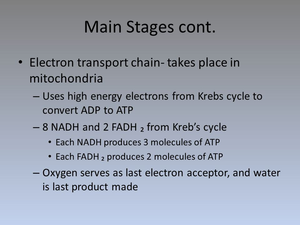 Main Stages cont. Electron transport chain- takes place in mitochondria – Uses high energy electrons from Krebs cycle to convert ADP to ATP – 8 NADH a