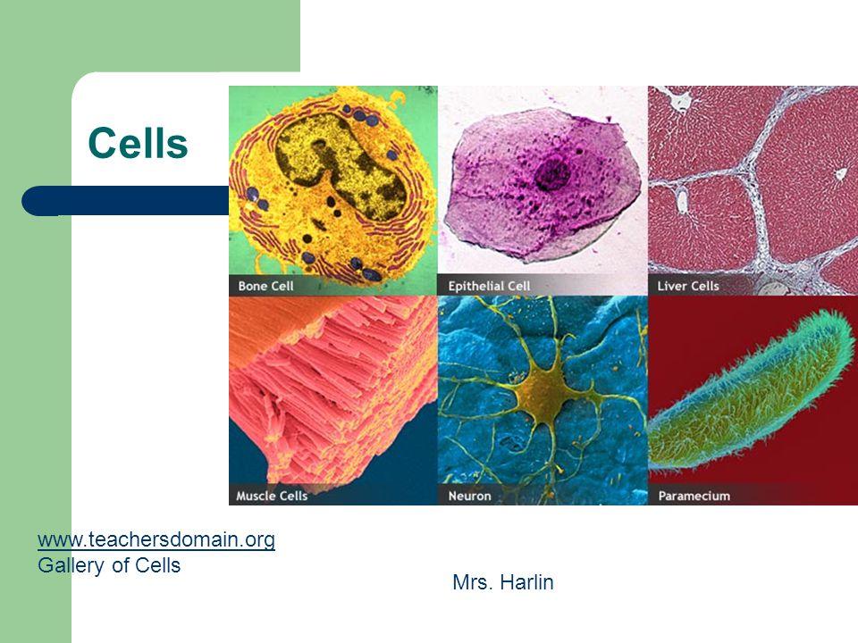 Cells www.teachersdomain.org Gallery of Cells Mrs. Harlin