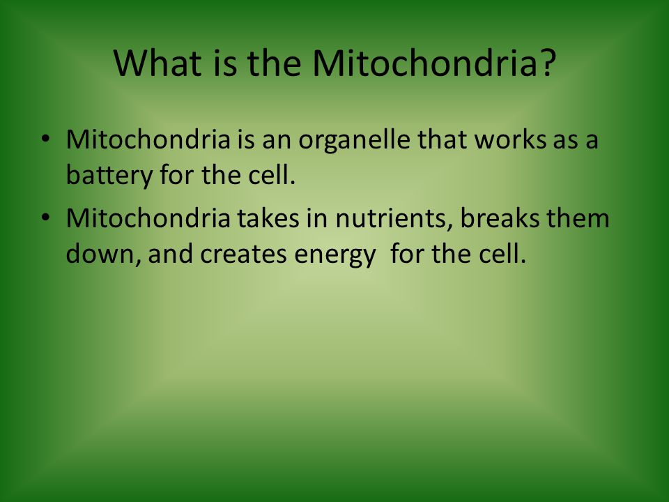 What is the Mitochondria. Mitochondria is an organelle that works as a battery for the cell.
