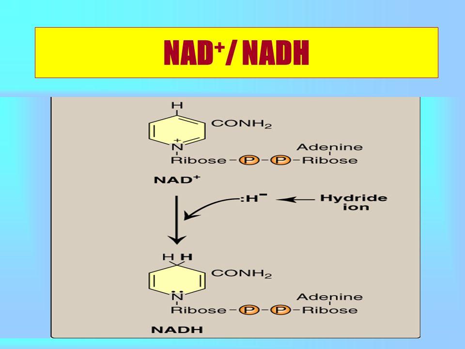 NAD + / NADH