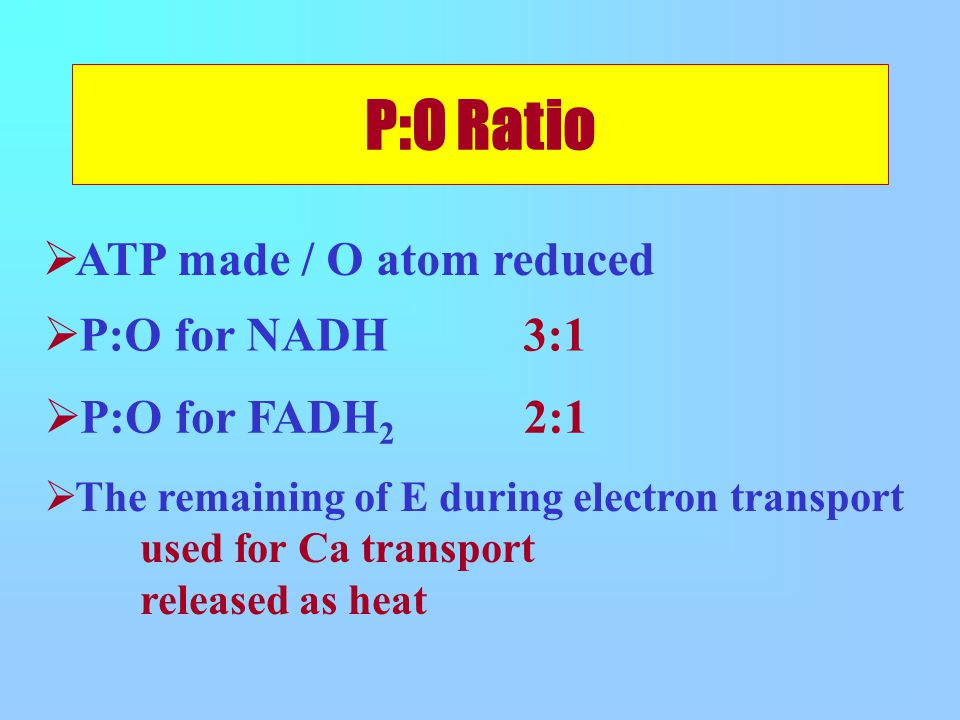 P:O Ratio  ATP made / O atom reduced  P:O for NADH 3:1  P:O for FADH 2 2:1  The remaining of E during electron transport used for Ca transport released as heat