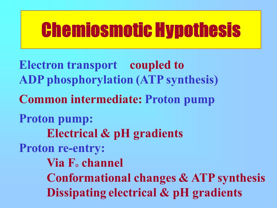 Electron transport coupled to ADP phosphorylation (ATP synthesis) Common intermediate: Proton pump Proton pump: Electrical & pH gradients Proton re-entry: Via F ° channel Conformational changes & ATP synthesis Dissipating electrical & pH gradients