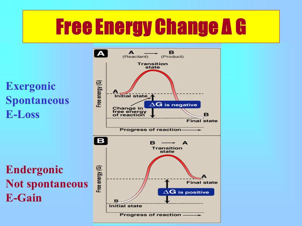 Free Energy Change Δ G Exergonic Spontaneous E-Loss Endergonic Not spontaneous E-Gain