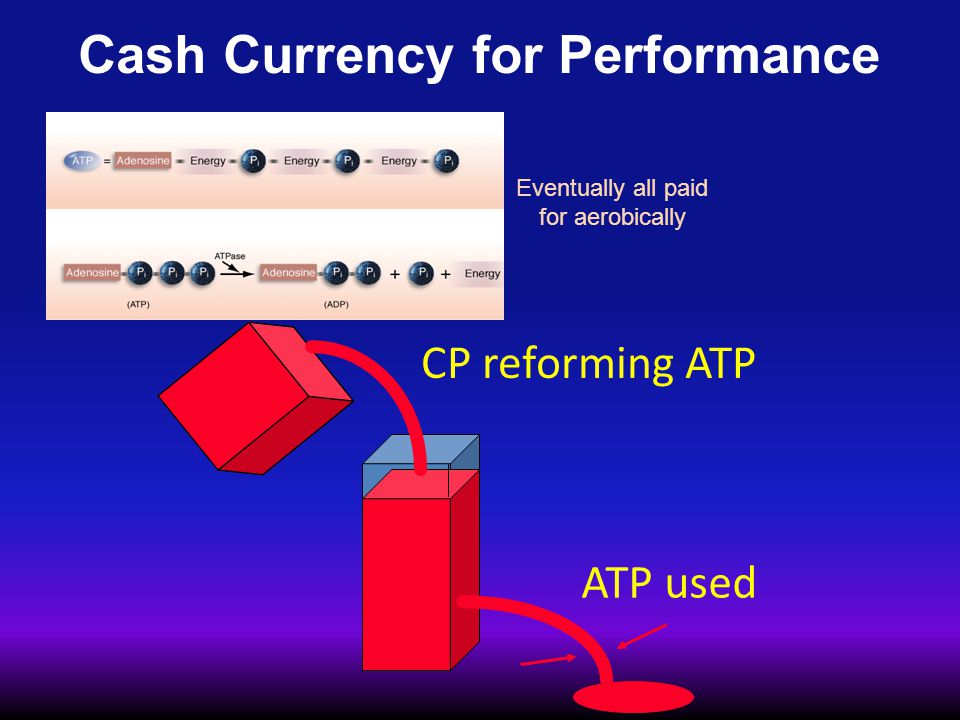 Cash Currency for Performance ATP used CP reforming ATP Eventually all paid for aerobically