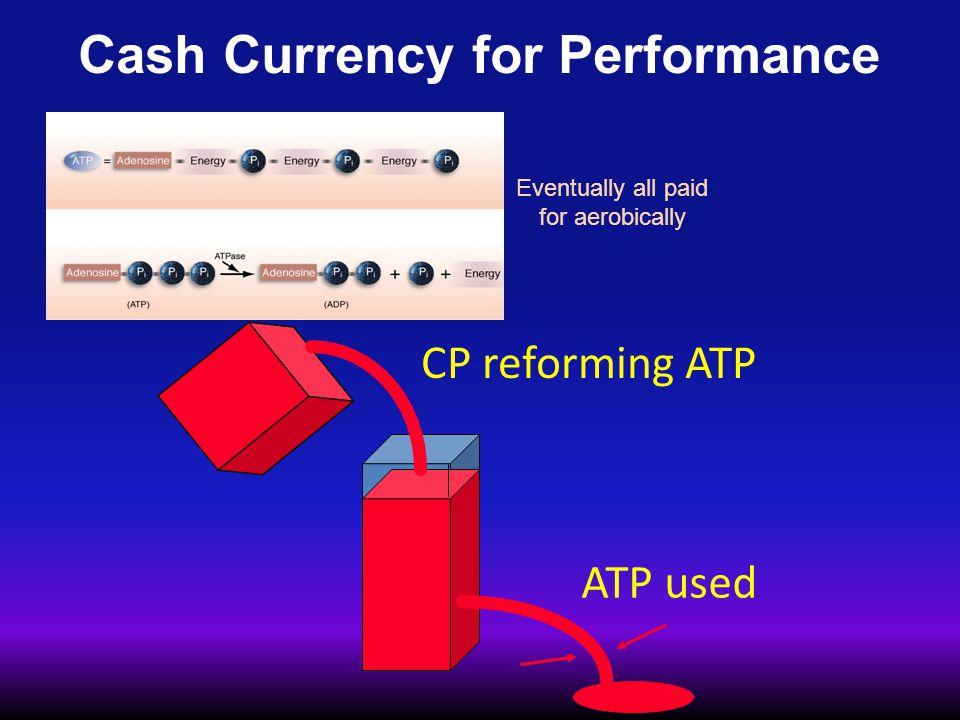PCr Shuttle PCr + ADP ATP + Cr ATP ADP CPK mitochondria sarcoplasm PCr Cr CPK ADP ATP ATPase Sarcomere Major Regulators of Cell Metabolism