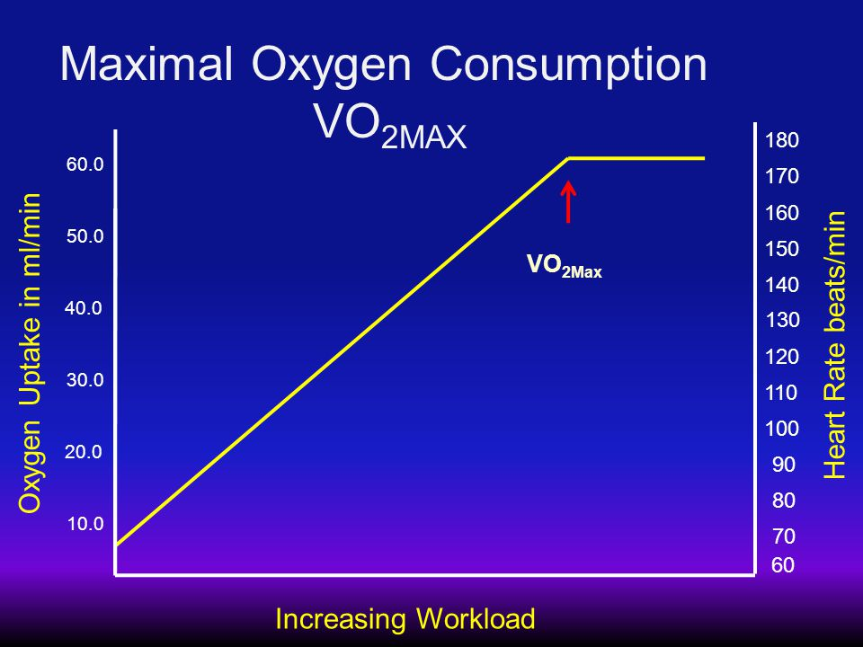 Maximal Oxygen Consumption VO 2MAX Increasing Workload Oxygen Uptake in ml/min 10.0 20.0 30.0 40.0 50.0 60.0 VO 2Max Heart Rate beats/min 60 70 80 90 100 110 120 130 140 150 160 170 180