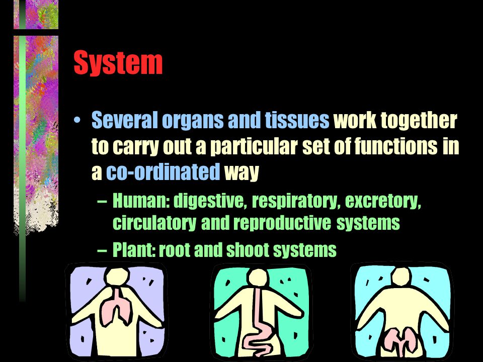 System Several organs and tissues work together to carry out a particular set of functions in a co-ordinated way –Human: digestive, respiratory, excretory, circulatory and reproductive systems –Plant: root and shoot systems