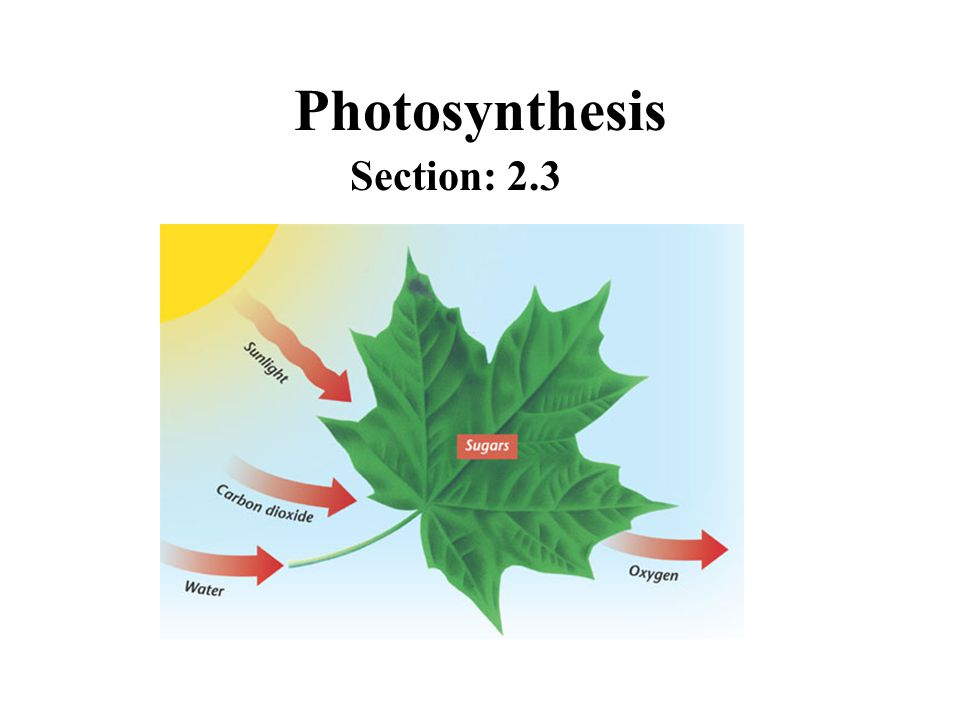 Photosynthesis Section: 2.3