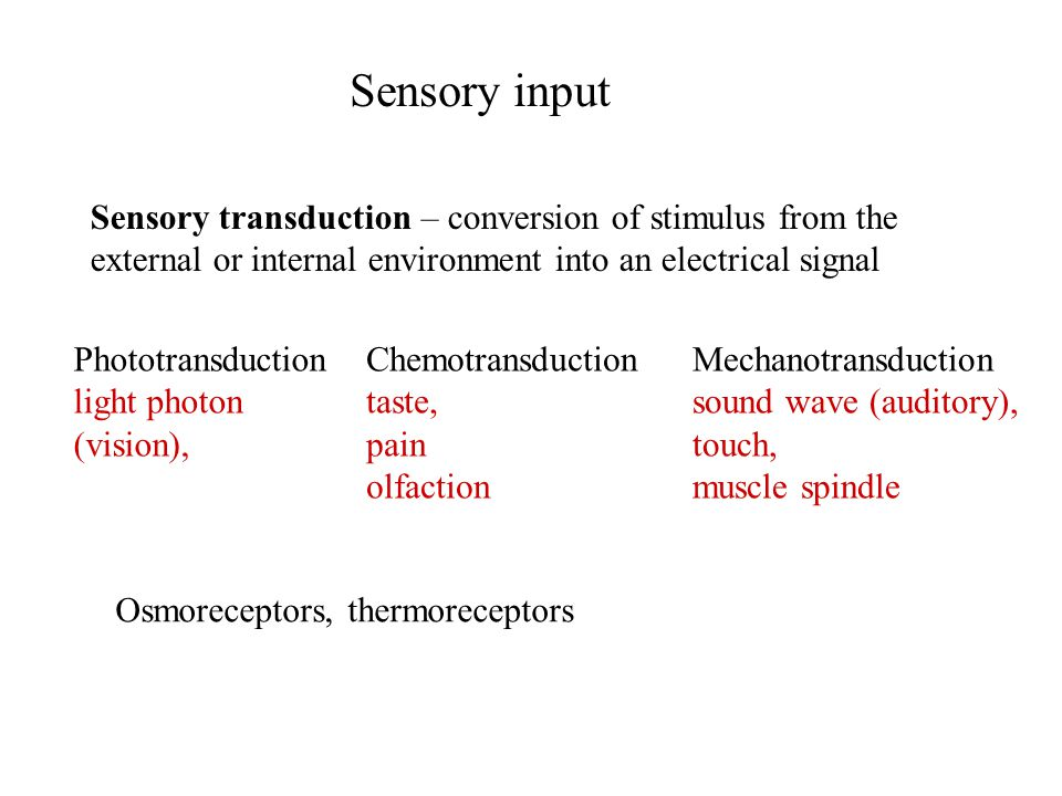 Sensory input Sensory transduction – conversion of stimulus from the external or internal environment into an electrical signal Osmoreceptors, thermor