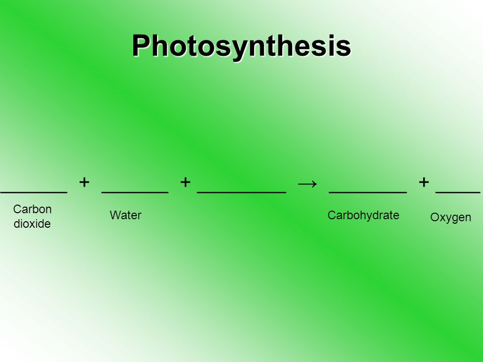 Photosynthesis ______ + ______ + ________ → _______ + ____ Carbon dioxide WaterCarbohydrate Oxygen